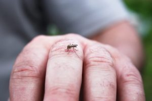 dangers of mosquito